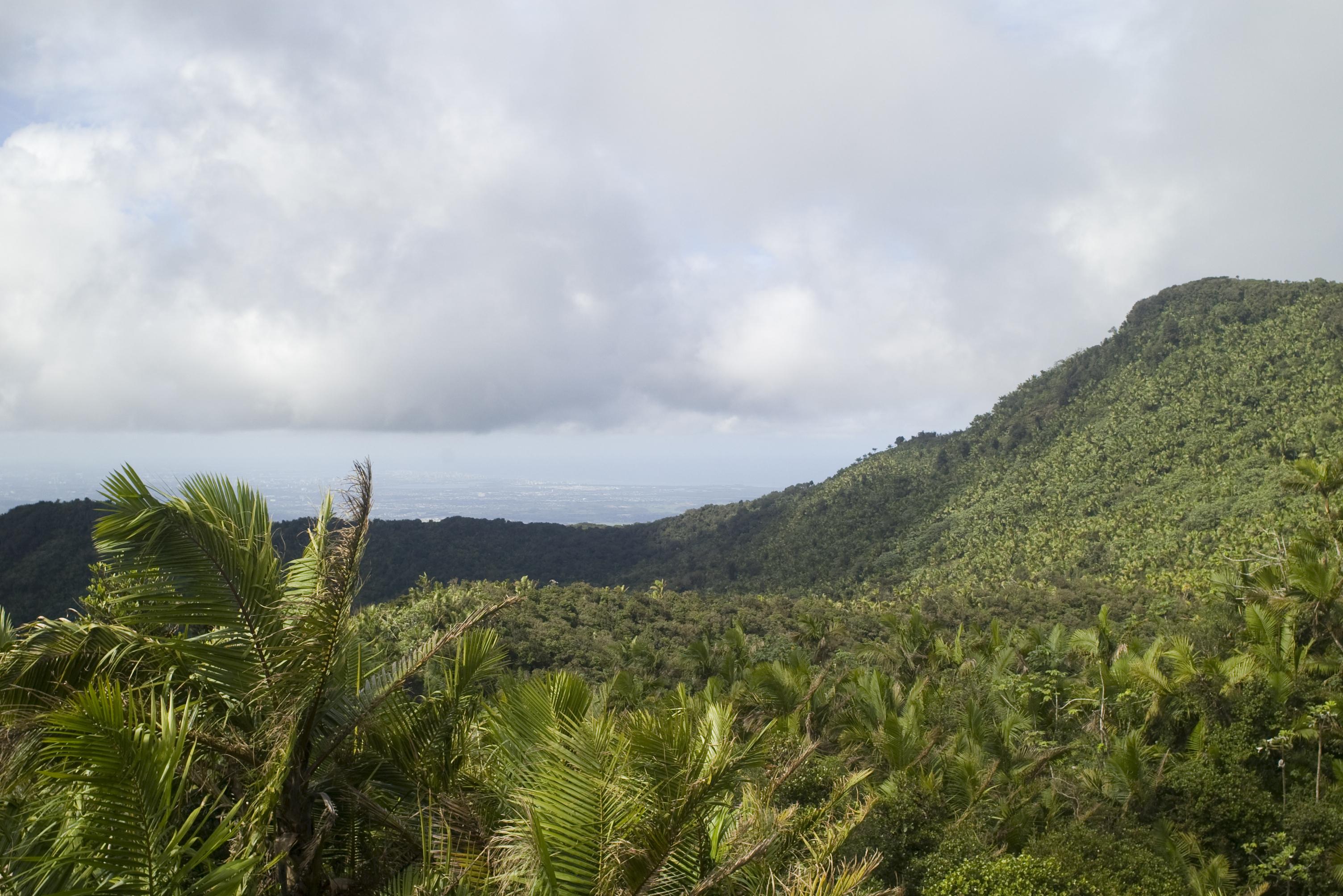 Puerto Rico's El Yunque forest reserve