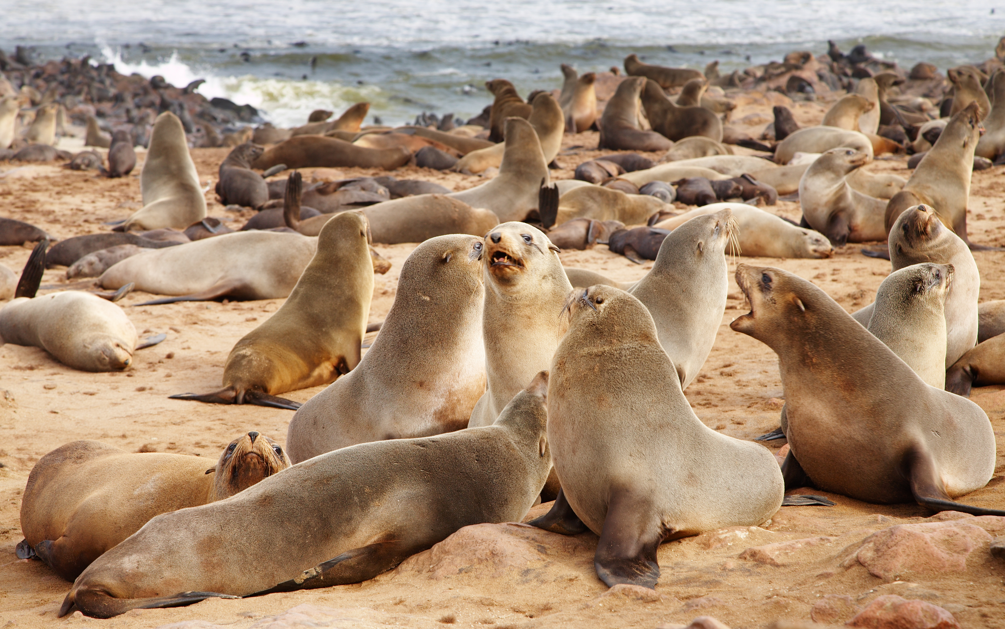 Namibia's seal colony at Cape Cross