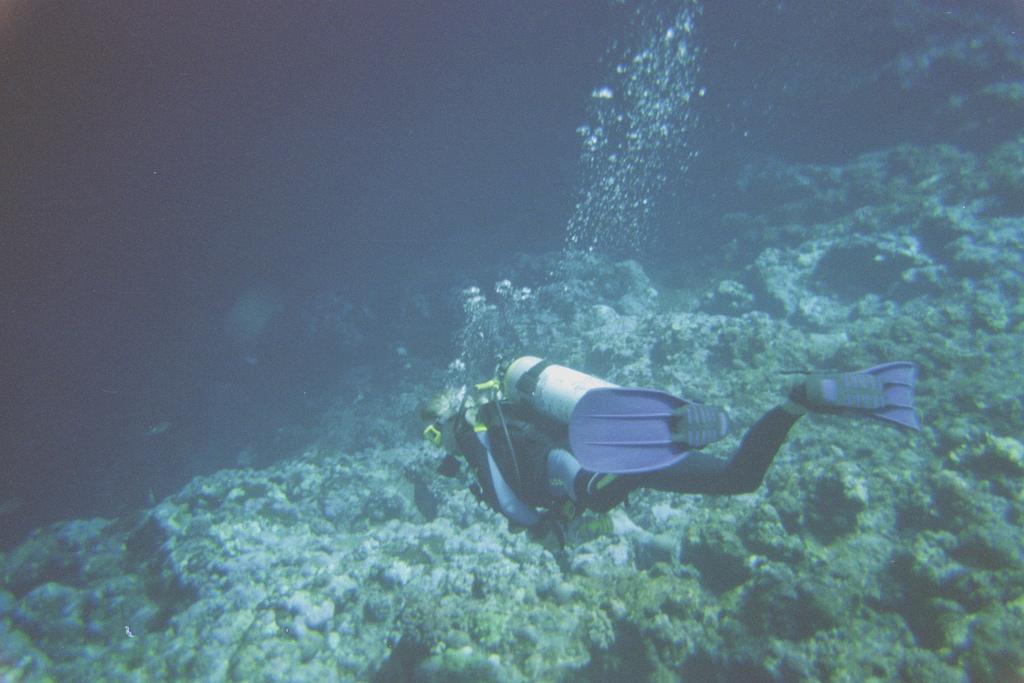 Dive in Rota in the Mariana Isles