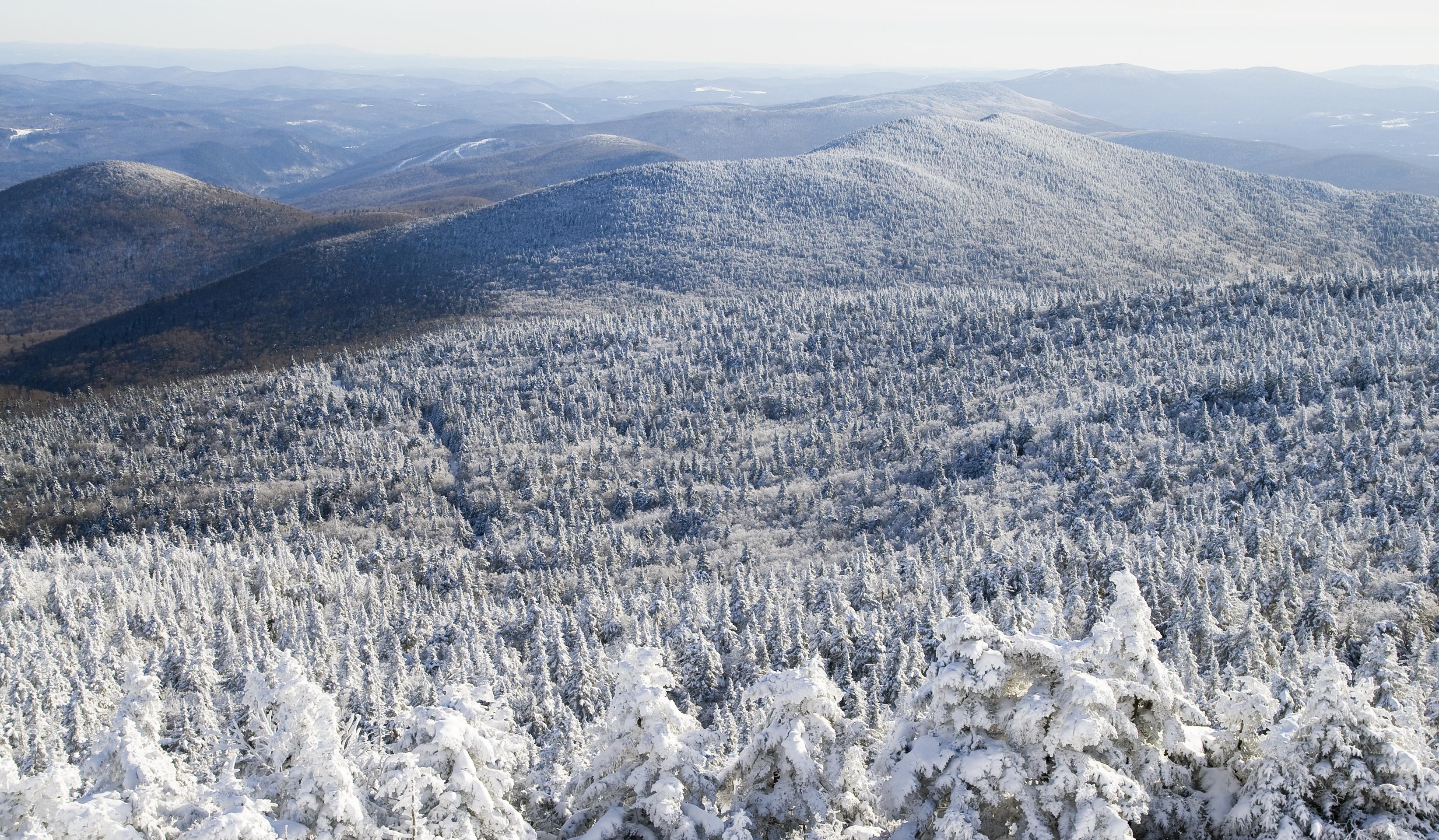 Snowy woodland in Vermont