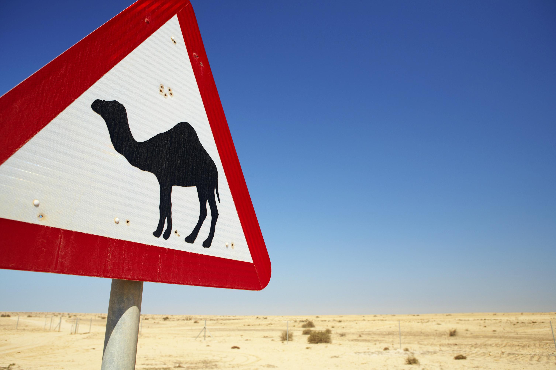 Camel warning sign, Qatar