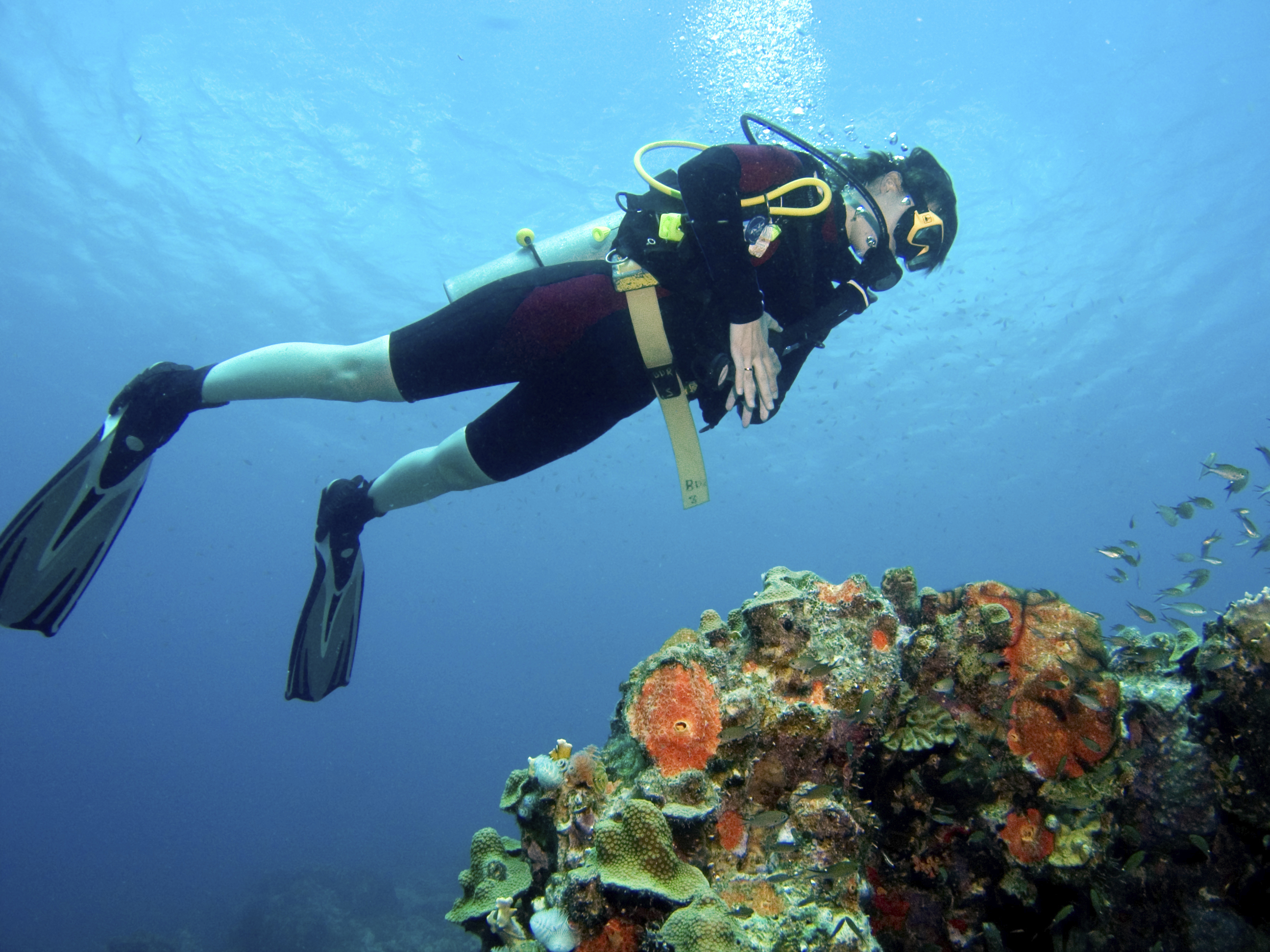 Bonaire is legendary for its diving