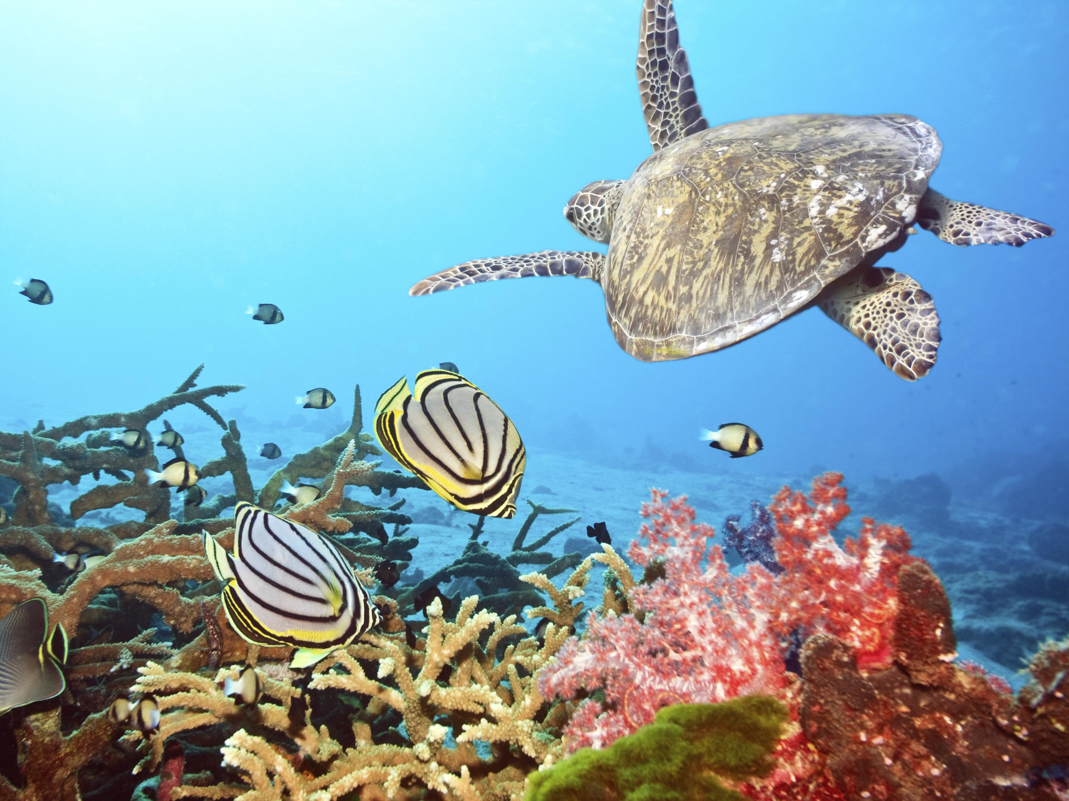 Fantastic diving in the Red Sea, Sudan