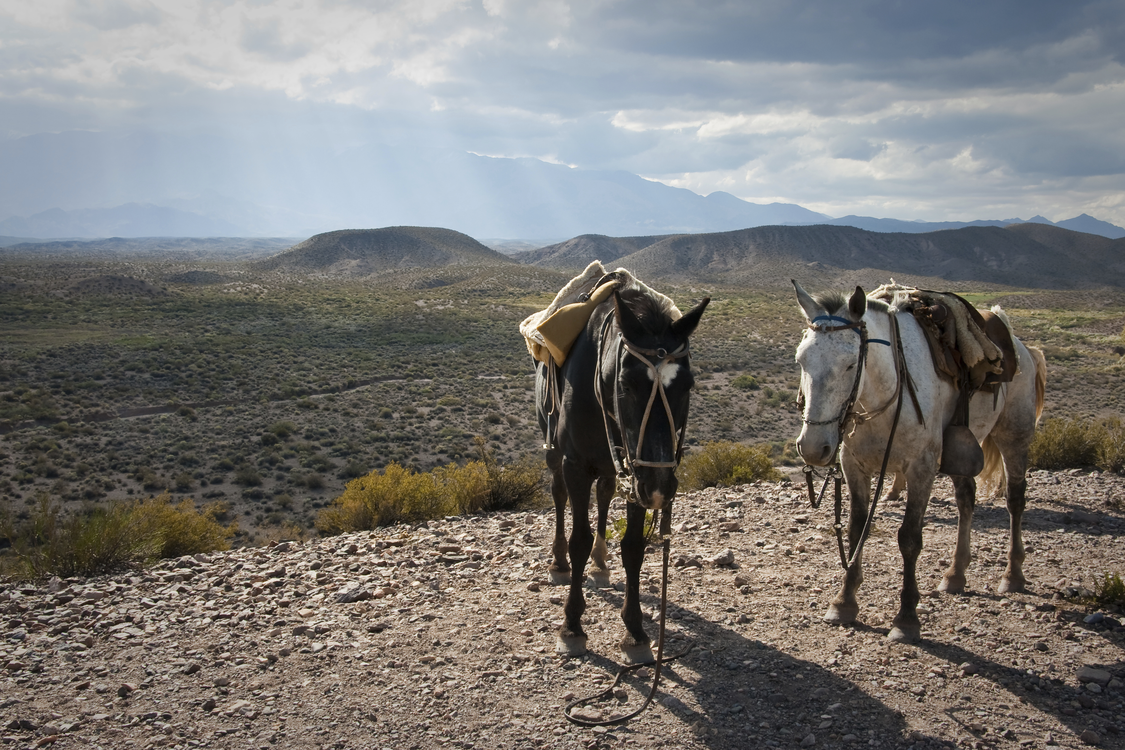 Horses in the Andes, Argentina