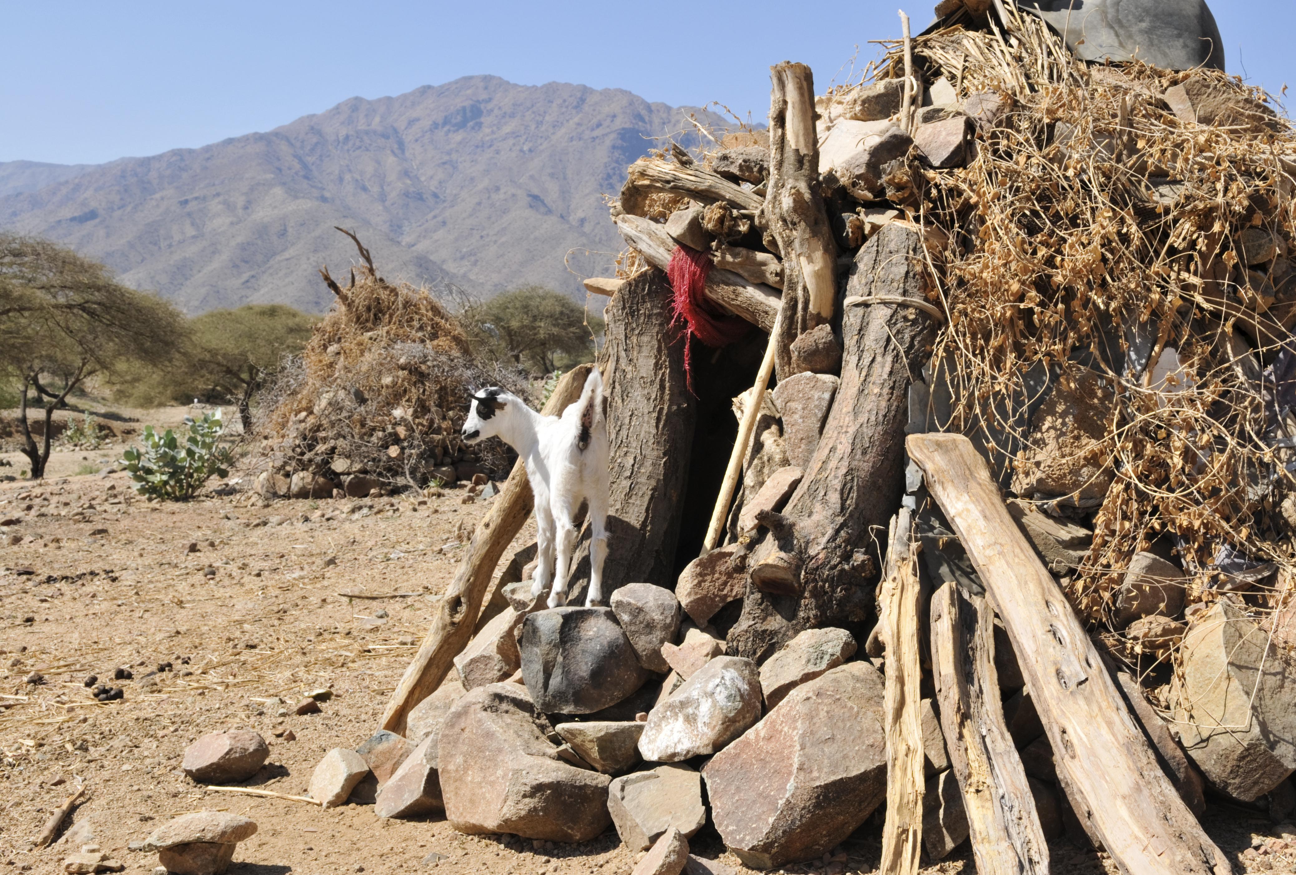 Eritrean goatshed