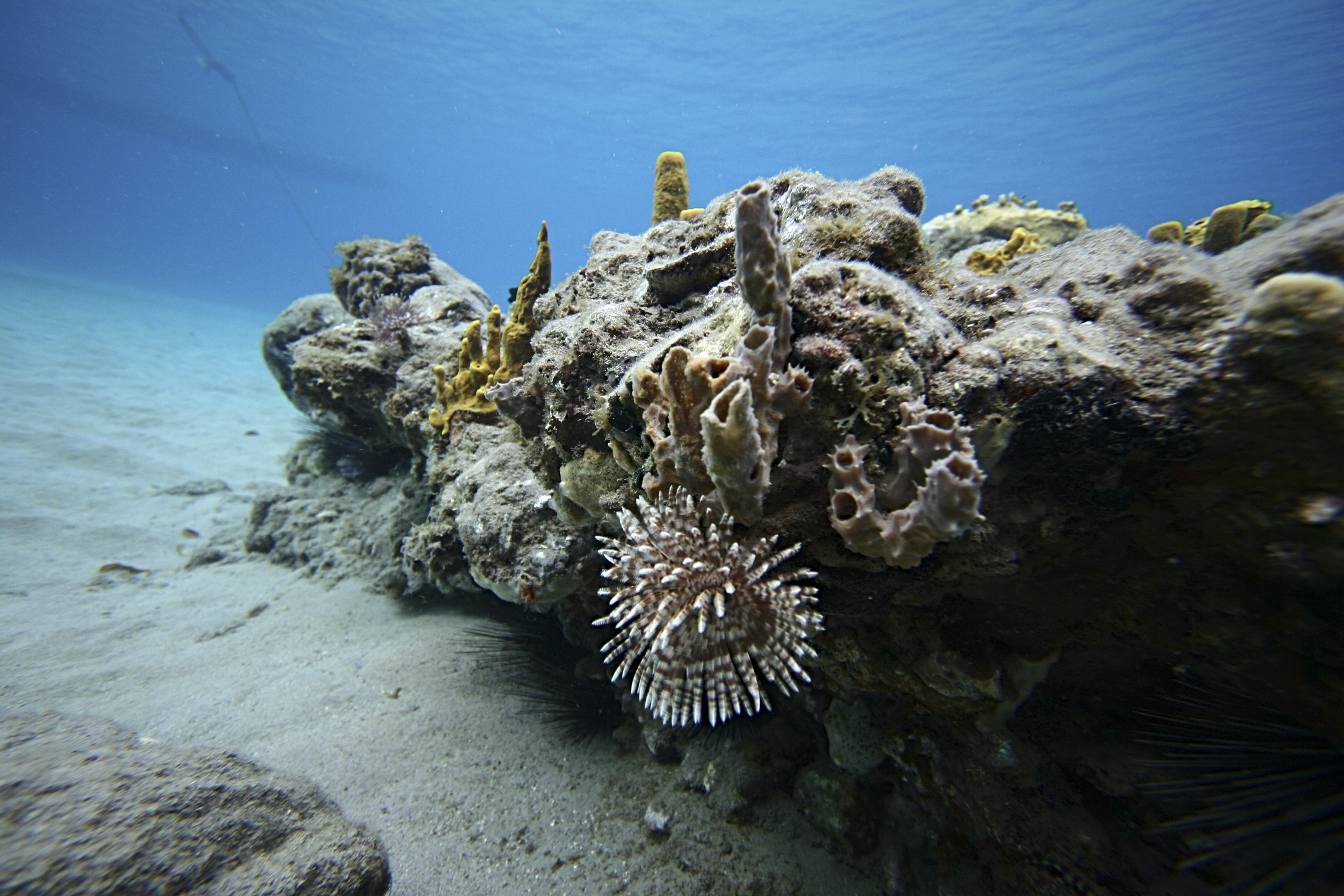 Martinique's reefs attract divers