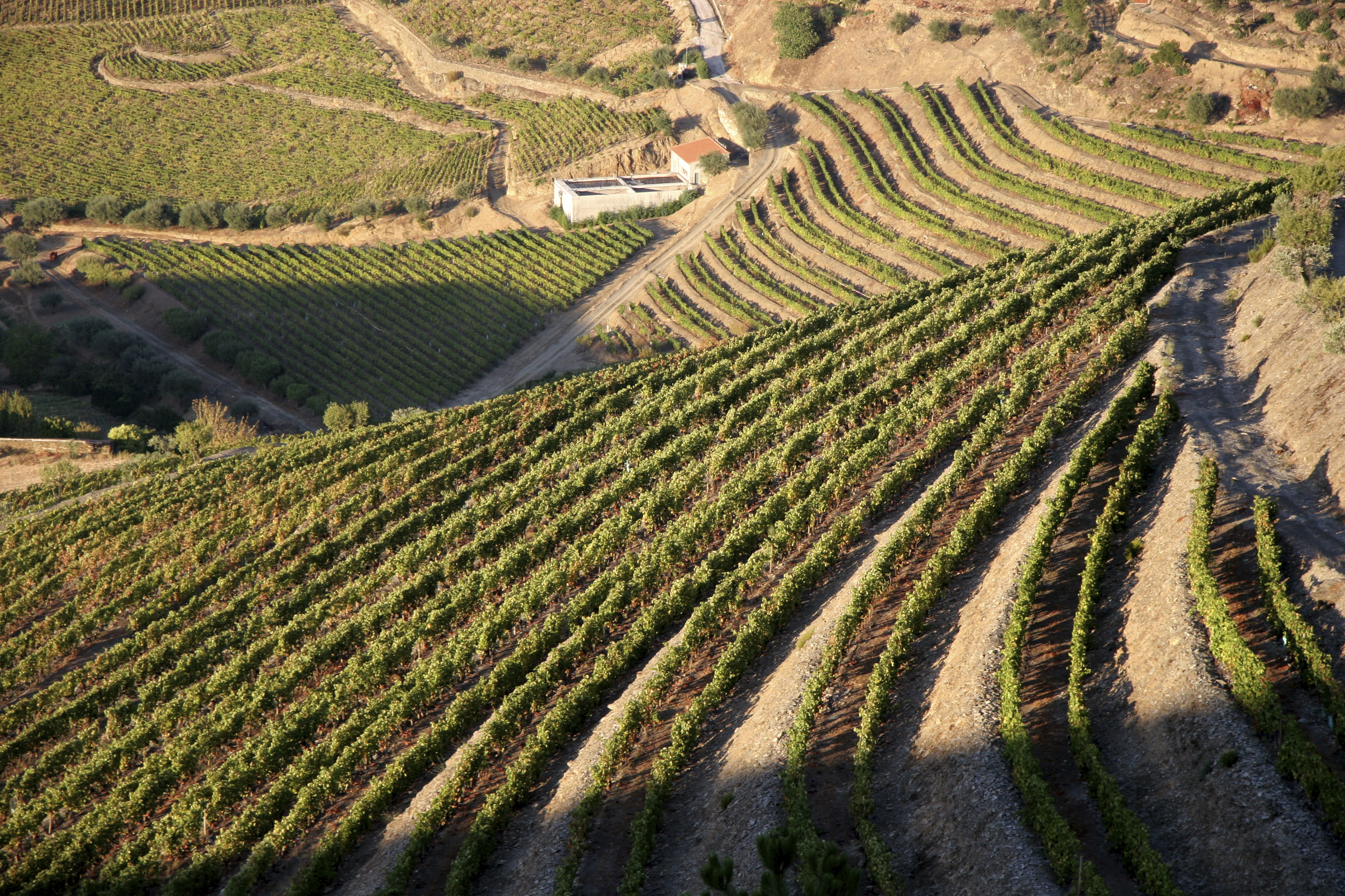 Portugal's Douro Valley is renowned for its vineyards