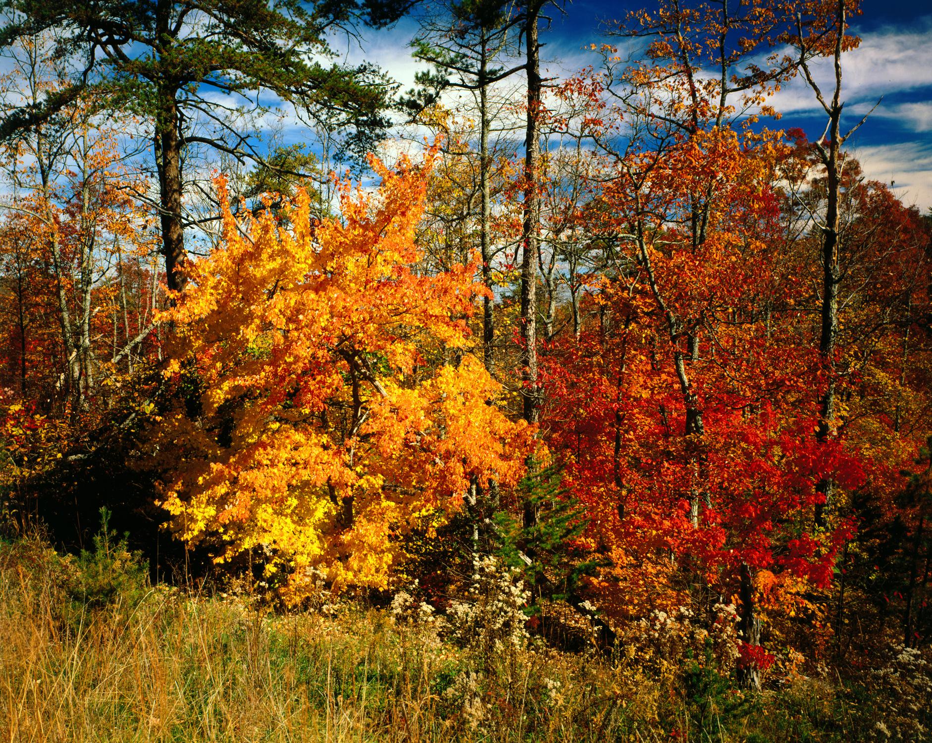 Alabama in autumn