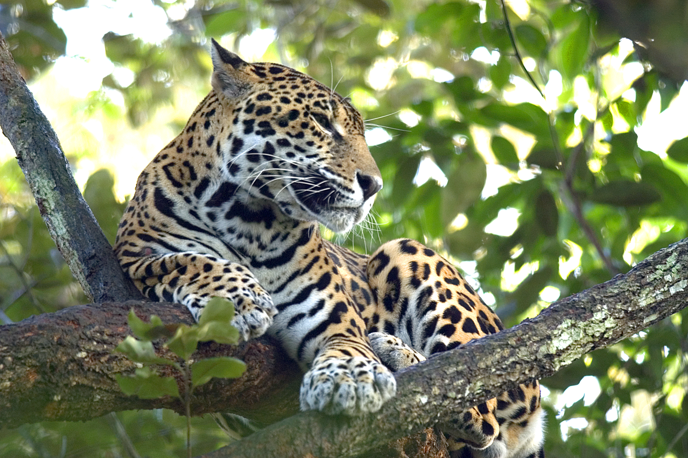Nature is one of Belize's main attractions