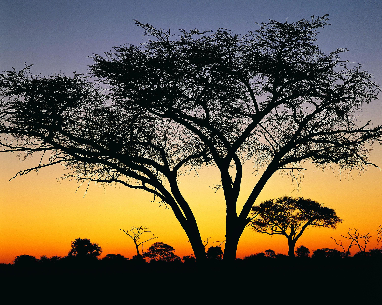 Sunset at Hwanga National Park