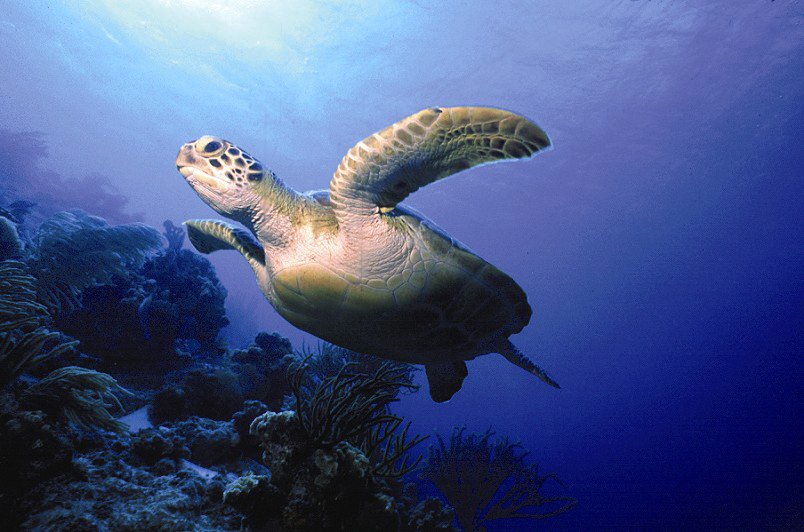 Bonaire's stunning marine life