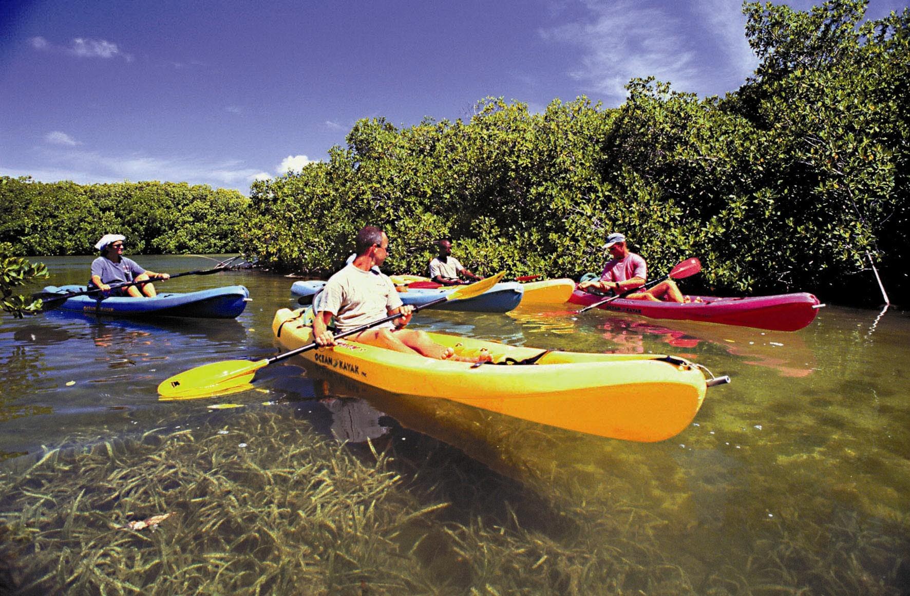 Kayaking through the mangroves, Bonaire